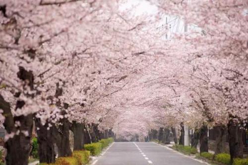 斗罗大陆千仞雪沉沦之辱 日本无遮掩床震视频过程